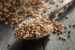 Vegan Protein: Why Fermented Grain-Like Seeds Are the Answer